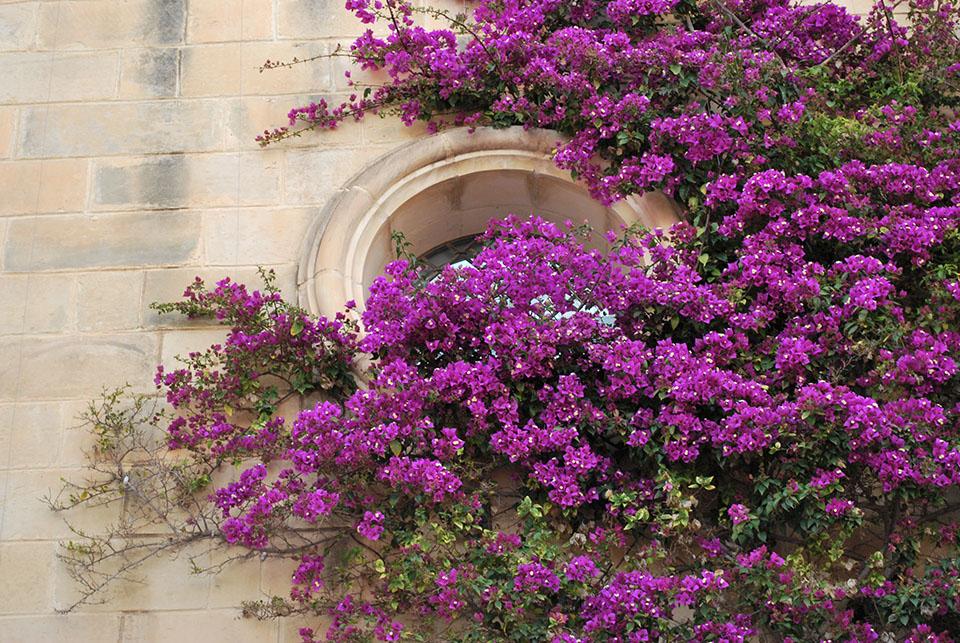 mdina porte fleurie